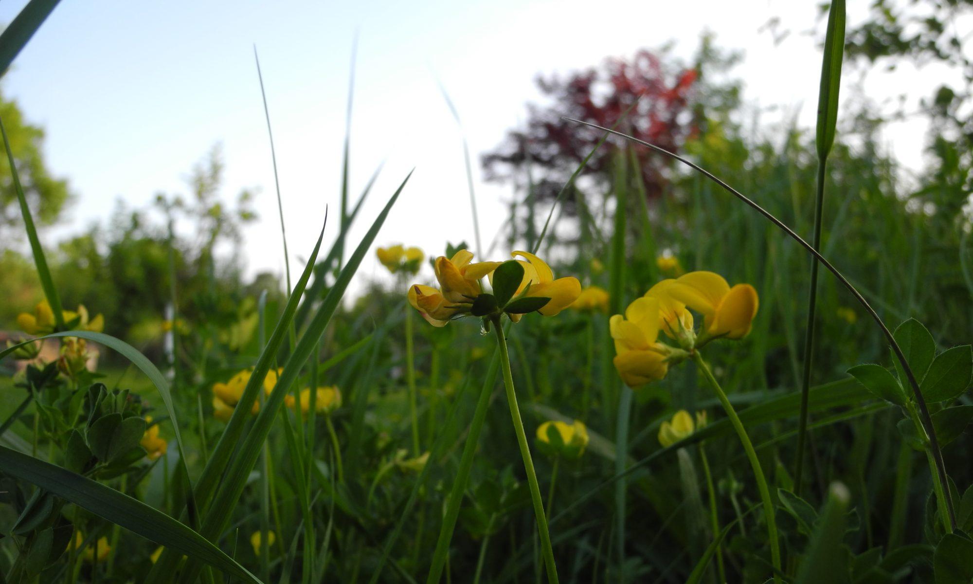 ARTENREICH – naturnahe Gartengestaltung